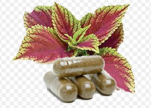 Forskolin active- efeitos secundarios  - efeitos- ordem