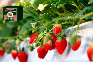 Home berry box - preço - funciona - forum